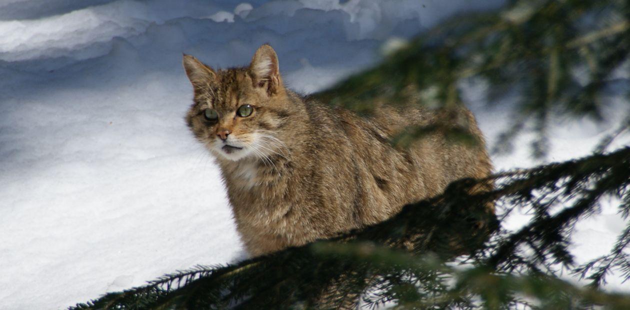 В отличие от собак, домашние кошки подросли за последние 2 тыс. лет