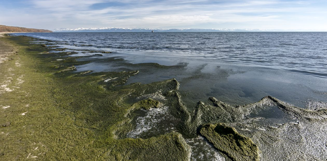 Spirogyra in Lake Baikal: Environmental Emergency.  First-Hand Information