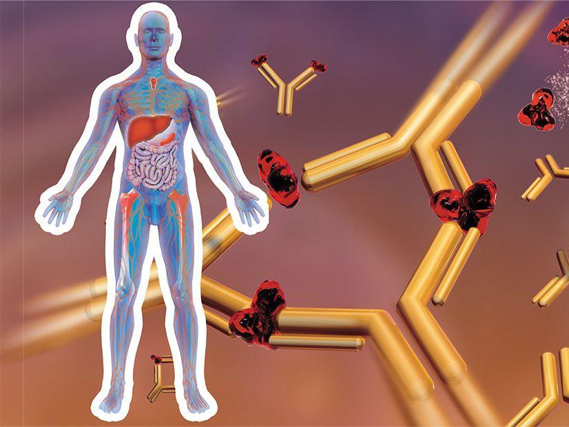 когда при сифилисе появляются иммуноглобулины