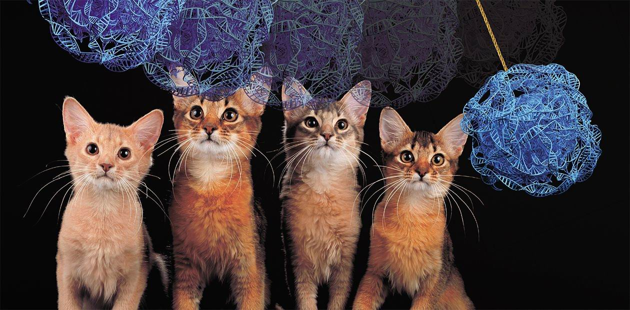 Cats and genes: 40 years later