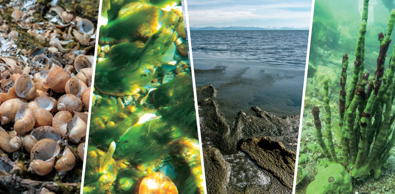 Ecological Crisis on Lake Baikal: Diagnosed by Scientists