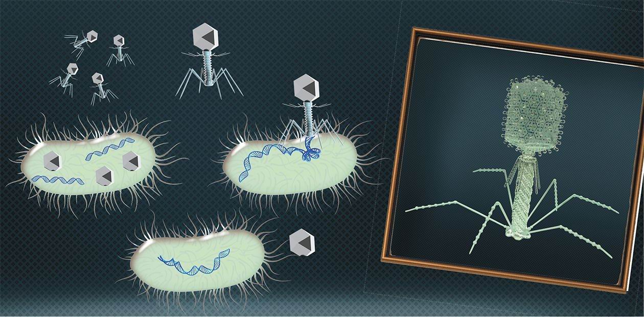 Bacteriophages: 100 years in the service of mankind