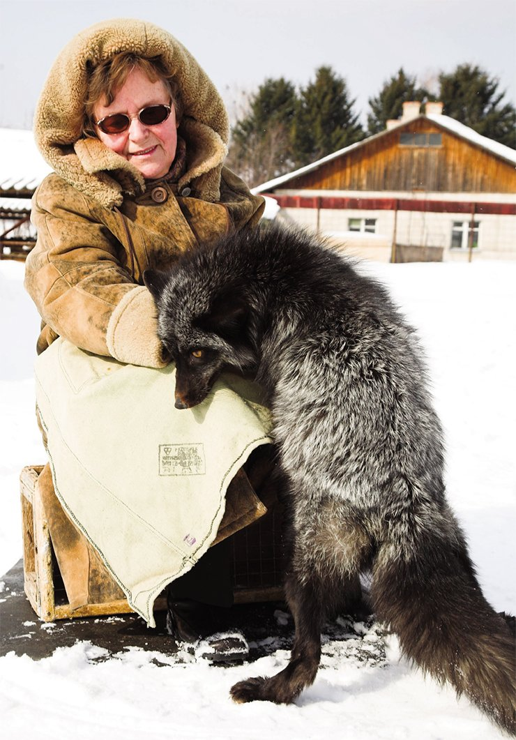 L.N. Trut with a tame fox. 2012. Photo: V. Koval '