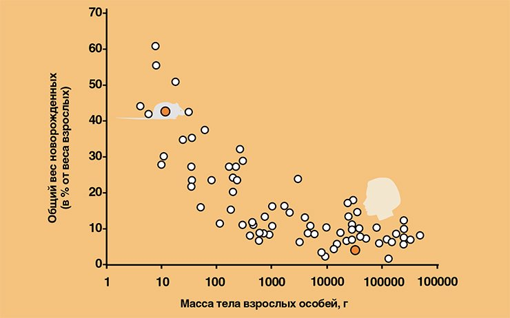 Общая масса новорожденных по отношению к массе тела матери у млекопитающих разного размера в диапазоне от «мыши до слона». График построен с использованием данных Л. В. Полищука и В. Б. Цейтлина (2001)