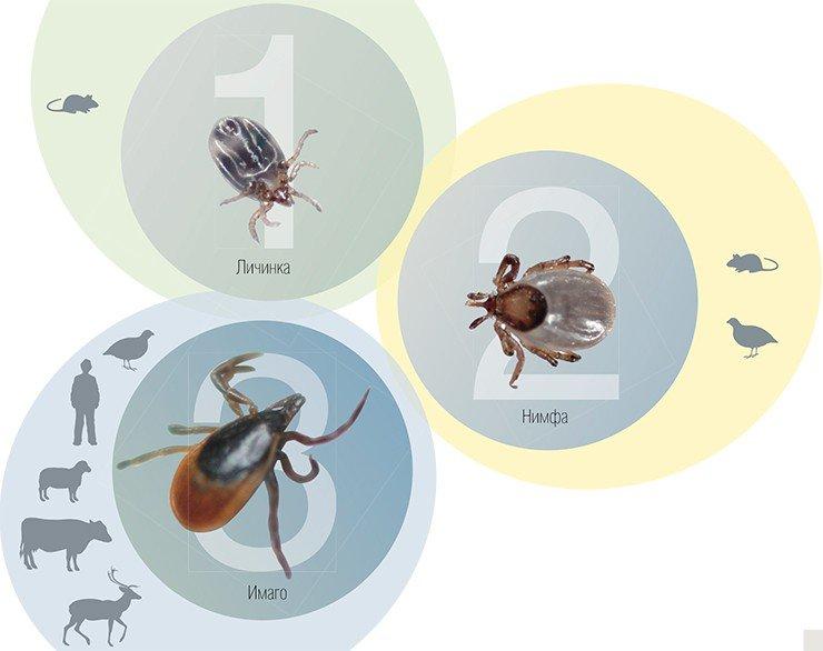 медикаменты от паразитов в организме человека