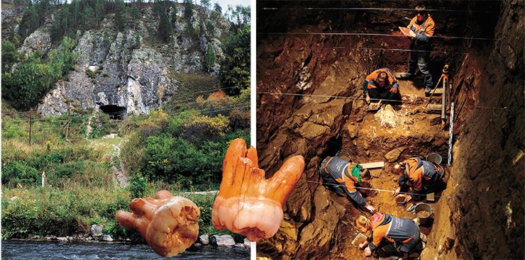 Left: Denisova Cave is a dependable repository of the ancient history of Altai. Photograph by M. Shunkov. On right: Novosibirsk archaeologists have been excavating Pleistocene sediments in Denisova Cave, the Altai Mountains, where man first appeared about 300,000 years ago. The third upper molar, a wisdom tooth of a Denisovan, discovered in the lithologic layer 11 within the sediments dating back to 50,000-40,000 BP