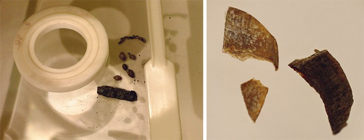 Hemp seeds from the Pazyryk burial ground, ready for analysis (left). Cut-off nails found in the male grave (right). Mound No. 1, Verkh-Kal'dzhin-2 burial ground