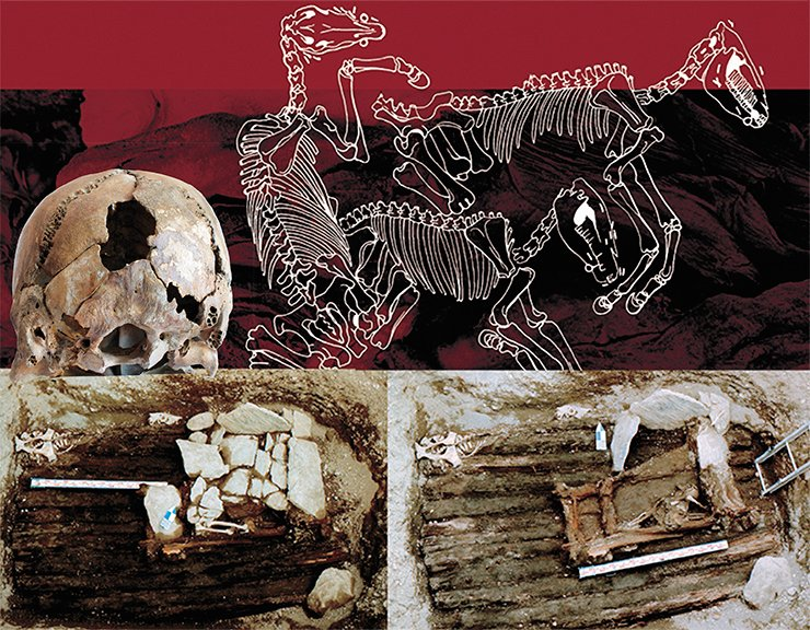 Above the first human burial in Tumulus 1 of the Ak-Alakha 3 site was the burial of horses. Sketch by Ye. Shumakova. On the ceiling of the vault with the mummy of a high-born woman there was another burial chamber with two dead people, made of blocks covered with slabs of stone (left). The back of the skull of one of the dead showed traces of a blow that must have caused his/her death (below). This grave had been violated by ancient robbers. Photo by V. Mylnikov. The photo of the skull by M. Vlasenko