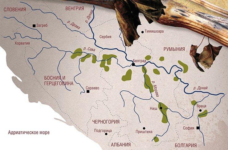 Нефропатия Балканская