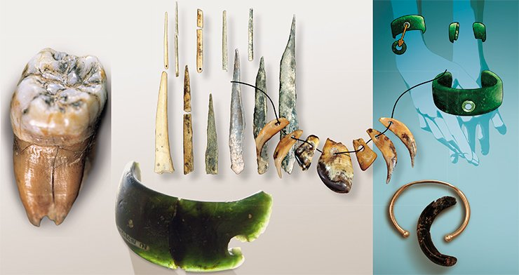 Left: a most rare find of Denisova Cave – a tooth of one of the first Asian Homo sapiens. On right: These unique artifacts of the Upper Paleolithic culture (a necklace, needles and a bracelet) testify that in Altai the Upper Paleolithic began earlier than in Europe