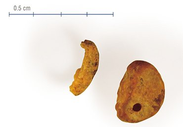 A piece of the hominin little finger bone discovered in Denisova Cave