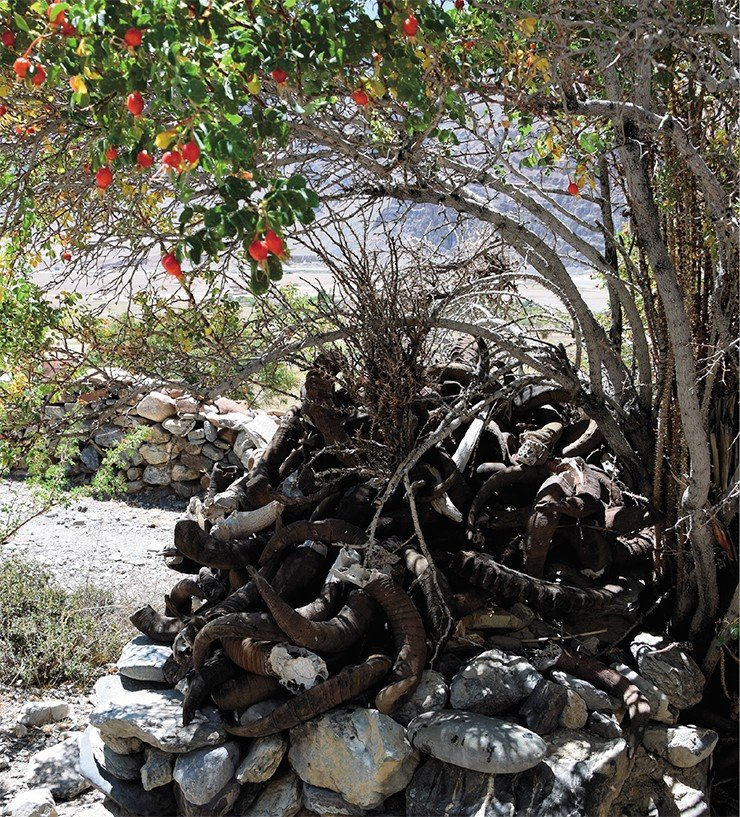 Святилище с рогами животных (вверху). На пути в Занскар – долина реки Суру (внизу)