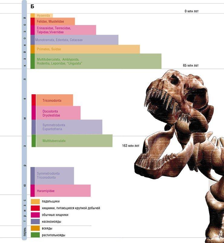 Схема эволюции млекопитающих (А) и структура экологических ниш сообществ млекопитающих (Б) в мезозое и кайнозое. Современные млекопитающие подразделяются на два подкласса: прототерии и терии. В мезозойской биоте они образовывали четыре-пять групп, занимавших разные экологические ниши. Важным событием в эволюции стало появление в юрском периоде многобугорчатых – фактически первых мелких эффективных растительноядов. Еще одно значимое событие – появление во второй половине мелового периода крупных (размером с кошку) хищников: до этого момента млекопитающие и динозавры практически не «пересекались»