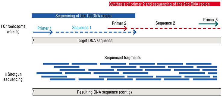 Two strategies for decoding genomes were developed in the 20th century:chromosome walking and a shotgun method, both based on Sanger's enzymatic sequencing and named after its inventor, F. Sanger