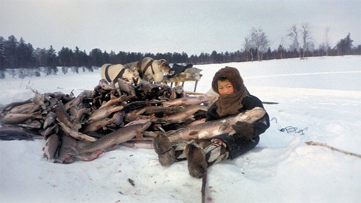 Winter fishing. A boy with a pike. The Niby-Yakha camp