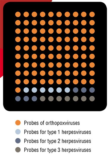 The microchip for simultaneous identification of orthopoxviruses and herpesviruses contains spots with manifold molecular proves (according to Sinyakov, 2007)