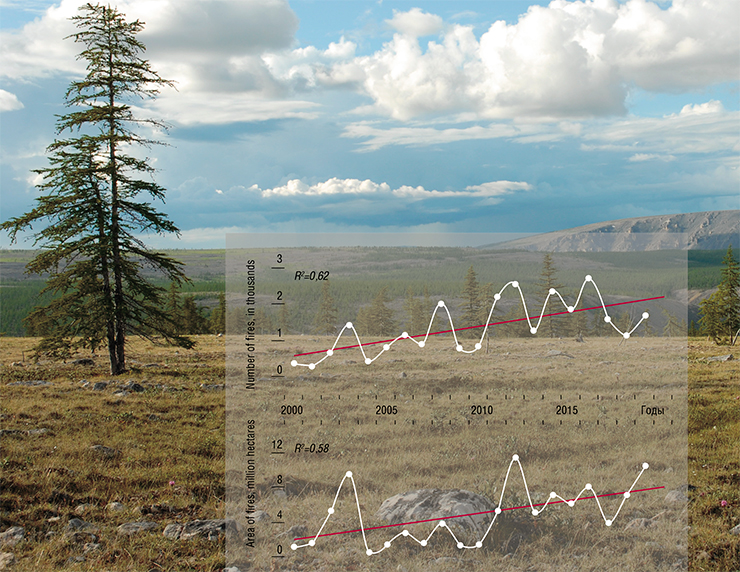 The 21st century sees an increase in the frequency and area of forest fires in Siberia, which is associated with warming and aridization in this region. Adapted from satellite images, Terra/MODIS. Foto: Larch regeneration in the Far North