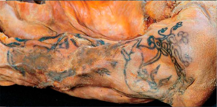 A tattoo on the mummy's shoulder. Mound 1, Ak-Allah-3 burial ground. Museum, IAET SB RAS