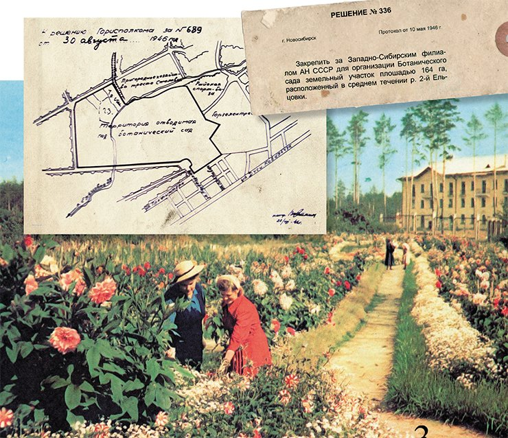 The first area for the botanical garden, a 164-hectare plot, was allocated in the Zayeltsovskiy district of Novosibirsk. Below – director L.P. Zubkus and an expert on wild plants of Siberia, E.V. Tyurina, near the collection of ornamental plants in front of the first brick-and-mortar building of the Garden