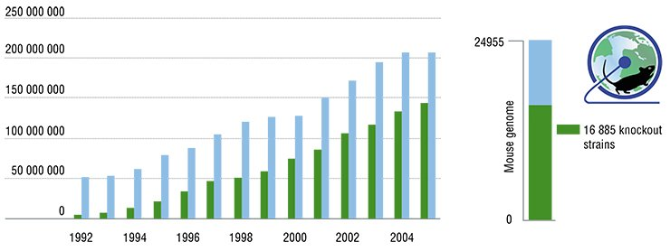 The total population of laboratory mice in Japanese universities and pharmacological companies has been increasing (left) owing to transgenic (including knockout) strains, which, in particular, simulate various genetically determined human pathologies. Judging by the number of the embryonic stem cells with knocked-out individual genes contained in the collection of the International Knockout Mouse Consortium, IKMC, (right), it is currently possible to create the genetic strains of knockout mice that would cover over half mouse genome. The data as of May 15, 2011