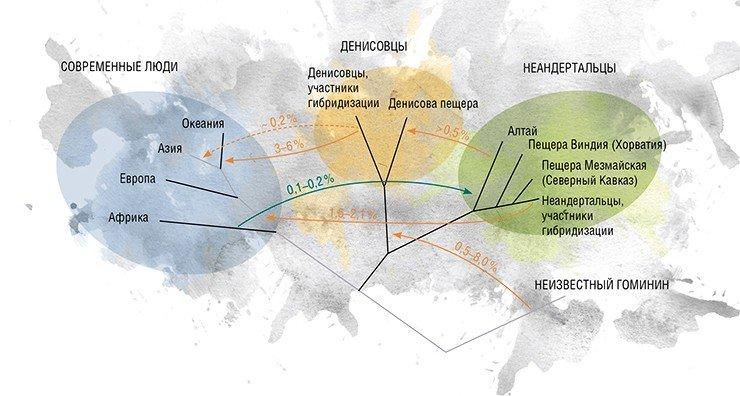 На этой модели представлены возможные генные потоки в человеческой популяции в позднем плейстоцене. Показаны направление и оценочная величина предполагаемых событий. Пунктирная линия указывает вливание в современный геном денисовцев, которое могло происходить как единожды, так и неоднократно. По: (Pr?fer et al., 2014)