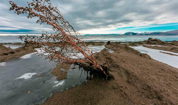 In some areas of North Baikal, a crust of rotten Spirogyra up to 10 m wide covers the once cozy beaches. October 2013. Photo by V. Korotkoruchko