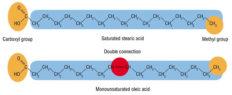 The carbon atoms in fatty acid molecules may be linked with either single or double (unsaturated) chemical bond