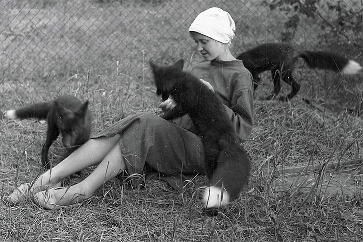 Belyaev's main achievement was the concept and implementation of the experiment on fox domestication, which demonstrates the role of behavior-based selection in animal domestication. The experiment is considered to be one of the most famous biological experiments of the twentieth century