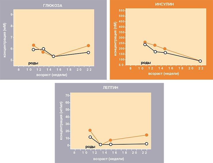 Во время лактации у желтых матерей нормализуются все параметры углеводно-жирового обмена. Затем уровни лептина, глюкозы и инсулина сохраняются в норме еще на протяжении почти более полутора месяцев после отсадки мышат