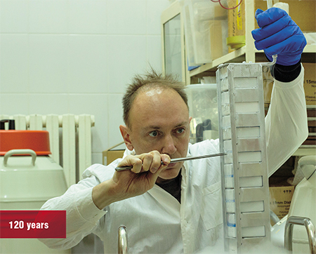 The Department of Genome diversity and Evolution of the IMCB RAS hosts a unique collection of cell cultures of various vertebrates, including rare and endangered species, many of which possess unique longevity mechanisms (the naked mole-rat, sloth, gray whale, Siberian sturgeon, Brandt's bat, etc.). Photo: A. Proskuryakova (IMCB SB RAS, Novosibirsk)