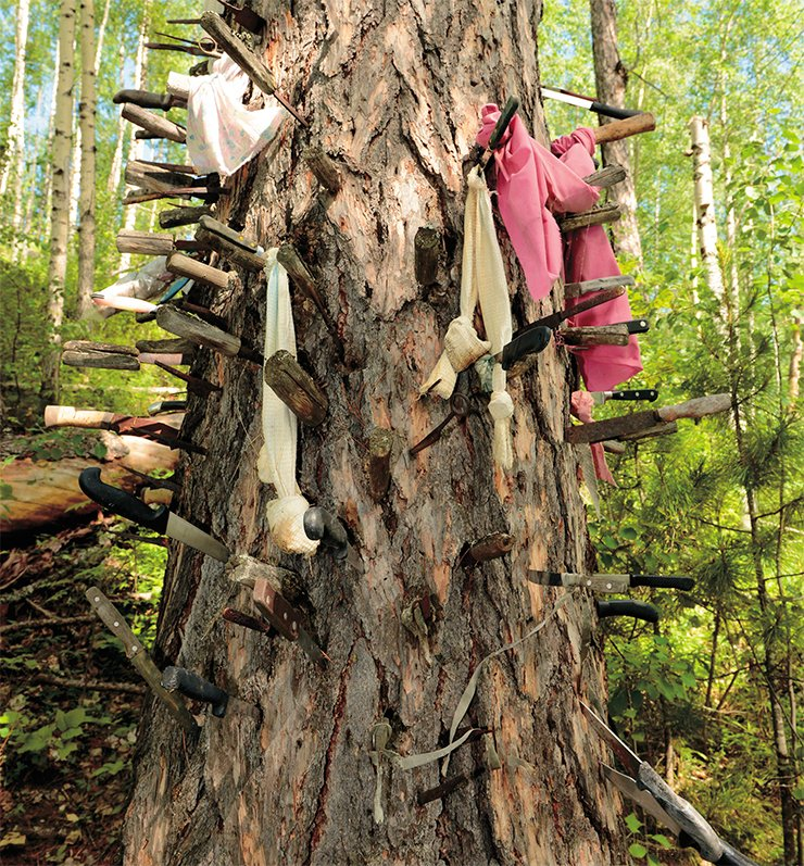 Offerings to Chokhryn-oyka – knives forced into the trunk of a larch. 2014