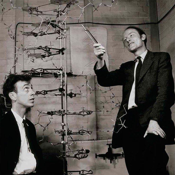 Джеймс Уотсон, Фрэнсис Крик и их модель ДНК. 1953г. Сredit: SPL/East News