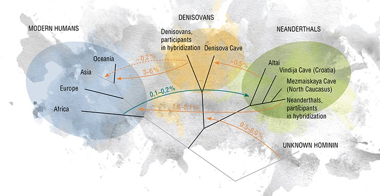 This model presents possible gene flows in the human population of the Late Pleistocene. The scheme shows the direction and estimated value of the possible events. The dashed line indicates the infusion of Denisovans into the modern genome, which could have occurred both once and repeatedly. Adapted from: (Prüfer et al., 2014)