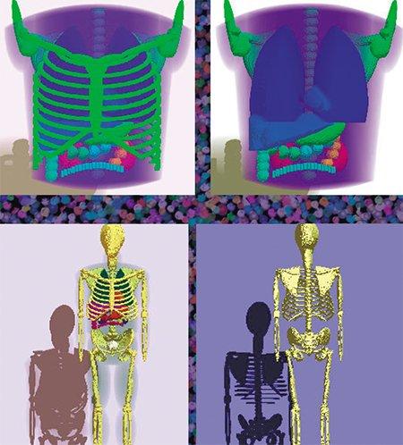 Вверху: 3D-математическая модель, описывающая распределение радиофармпрепарата в органах грудной клетки среднестатистического пациента при ПЭТ-обследовании Внизу: 3D-математический фантом для компьютерной имитации процедуры обследования пациентов методом ПЭТ