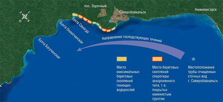 Визуальное обследование побережья северной котловины озера в сентябре–октябре 2013 г. показало, что гигантские скопления отмирающих водорослей приурочены к устью р. Тыя, а также кдесятикилометровой прибрежной зоне, простирающейся в западном направлении от устья. Участок побережья от г. Нижнеангарск до г.Северобайкальск оказался свободным от каких-либо береговых скоплений водорослей-спирогир. Схема выполнена О. Тимошкиным и Е. Зайцевой