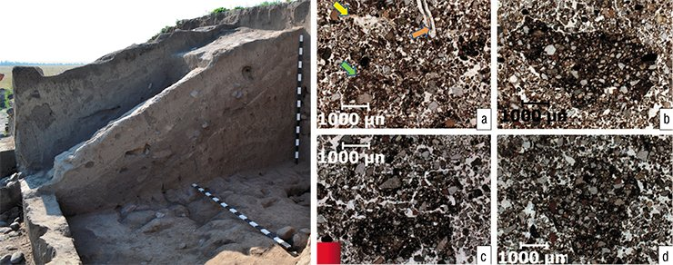 "Micromorphological photographs of samples from the soil horizons on the surface of the Martha Tumulus: a – ""normal"" structure of the humus horizon of soil in the mound (orange arrow – fossil vegetation, yellow arrow – humus-clayey-ferruginous inflow in the pores, green arrow – soil mass chopped by animals); b, c, d – microfragments of darker and densely packed material. Optical microscopy"