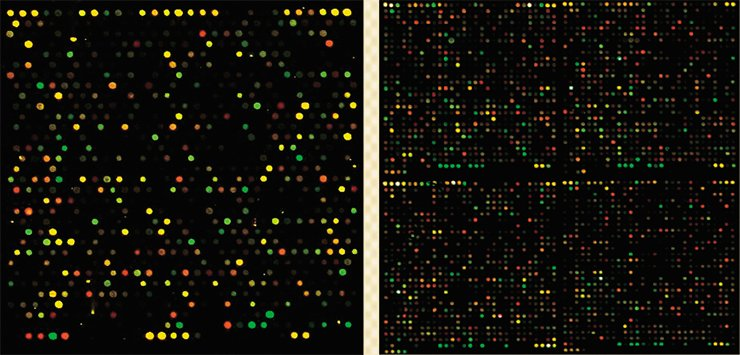 Left: one of the 48 units of the microarray with mouse oligonucleotides. Right: four of the 48 units of the microarray with human oligonucleotides