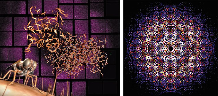 The free electron laser was used to decode the structure of the protein responsible for the African lethargy (left). Credit: Greg Stewart / SLAC National Accelerator Laboratory. The data obtained by the X-ray laser make it possible to reconstruct the three-dimensional structure of proteins and other complex organic molecules (right). Credit: Karol Nass / CFEL