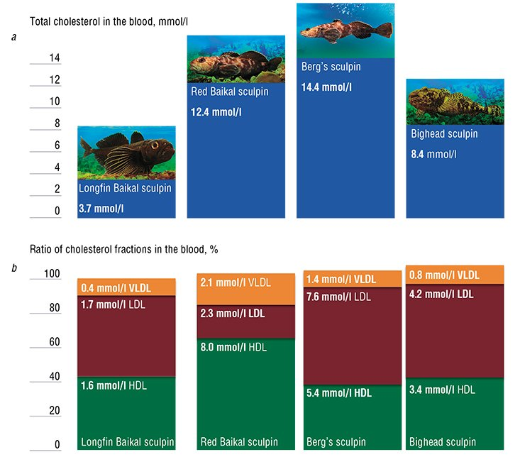Differences in the cholesterol concentrations and (a) its atherogenic and antiatherogenic fractions (b) in the blood of Lake Baikal sculpins