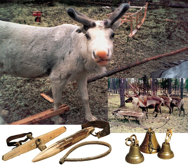 Reindeer in fetterlock. Reindeers harnessed in a sled (right). The Niby-Yakha camp. Stocks for the reindeer neck (bottom, left). Shaft-bow bells
