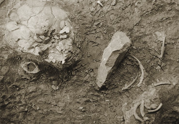 The cranium of a Neanderthal, Teshik-Tash, 1938. Archive of the Institute of History of Material Culture, Russian Academy of Sciences, St Petersburg
