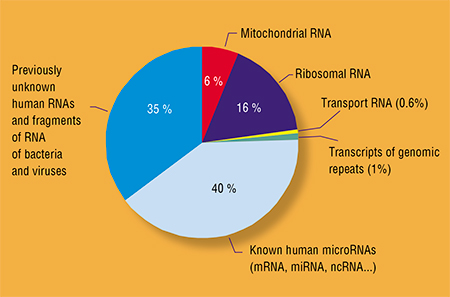 Human blood contains a huge number of hormones, growth factors, extracellular nucleic acids, antibodies, and other molecules, which circulate and combine to create a highly ordered information environment. The little understood blood components include thousands of microRNA molecules, capable of controlling the activity of genes. Left: RNA sequences of different origin and with different functions, circulating in human blood; estimated by mass parallel sequencing of blood plasma samples from healthy and sick people. Adapted from: (Rykova, Zaporozhchenko, and Laktionov, 2012)