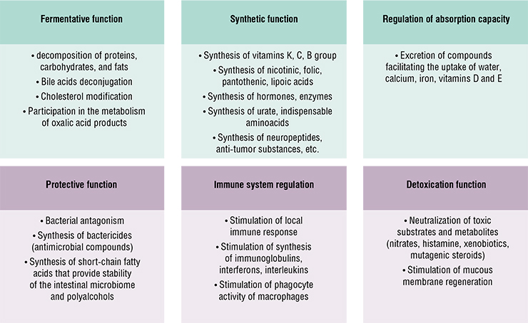 The range of functions of the normal intestinal microbiome is extremely broad – that is why it is sometimes treated as a separate human organ. Compounds produced by microorganisms take an active part in nearly all metabolic processes in the human body. Based on: (Polunina, 2018)