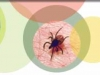 Tick-Borne Borreliosis: A Life-Long Disease?