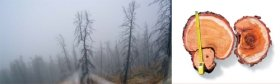 There's No Forest without Fire: Wildfires in the Taiga as a Natural Factor